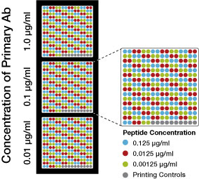 Peptide Array Testing