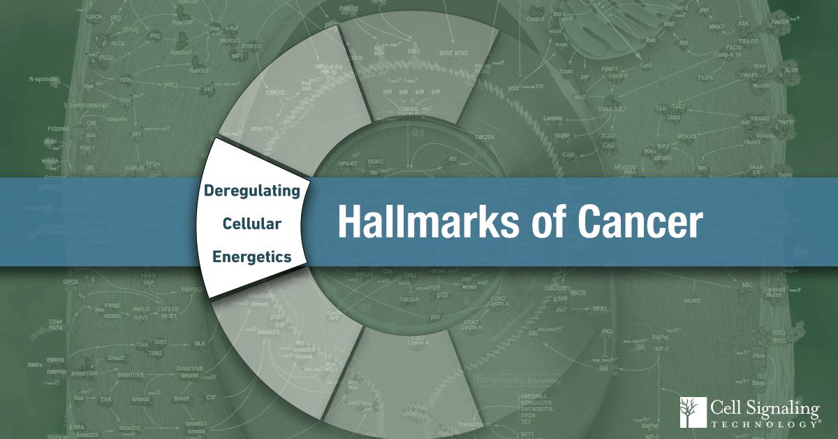 18-CEL-47388-Blog-Hallmarks-Cancer-2-Deregulating-Cellular-Energetics