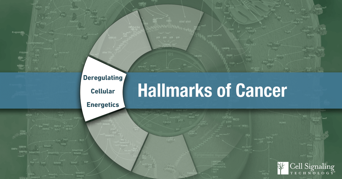 18-CEL-47388-Blog-Hallmarks-Cancer-2-Deregulating-Cellular-Energetics