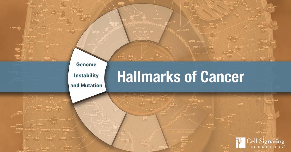 18-CEL-47815-Blog-Hallmarks-Cancer-5-Genome-Instability-Mutation-Signaling