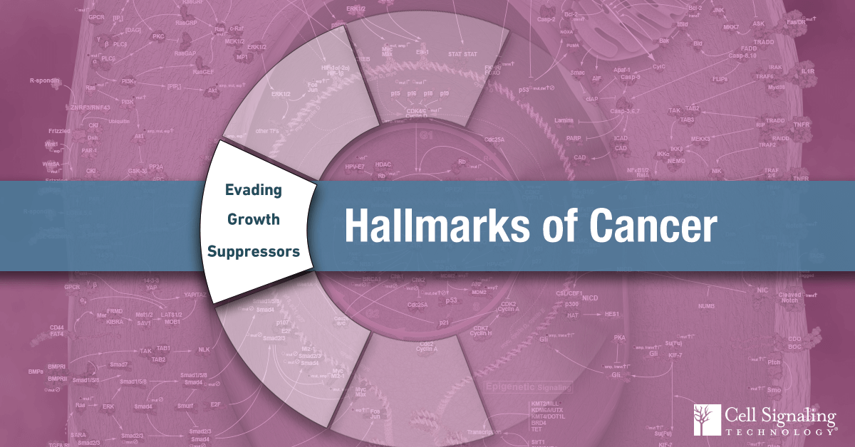 18-CEL-47815-Blog-Hallmarks-Cancer-Evading-Growth-Suppressors-6