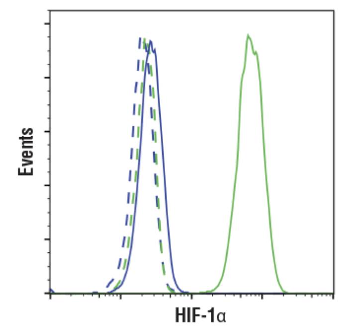 CST Antibody: HIF-1α (D1S7W) XP® Rabbit mAb