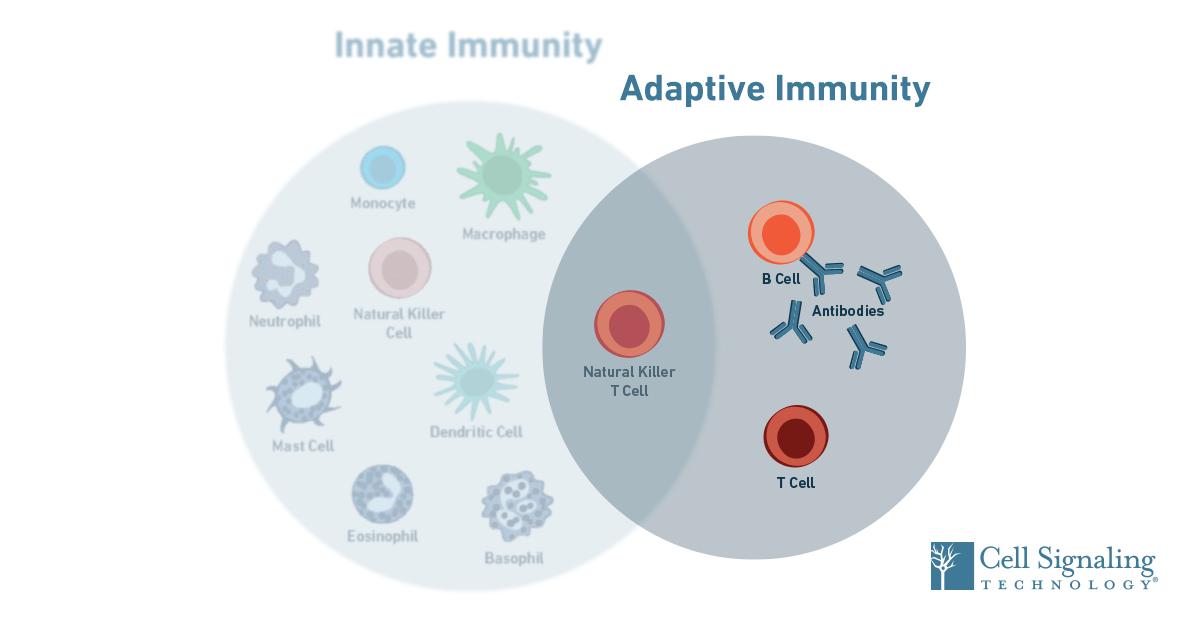 19-IMO-12805-Immunology-SEO-Blog-Content-Adaptive-1200x628
