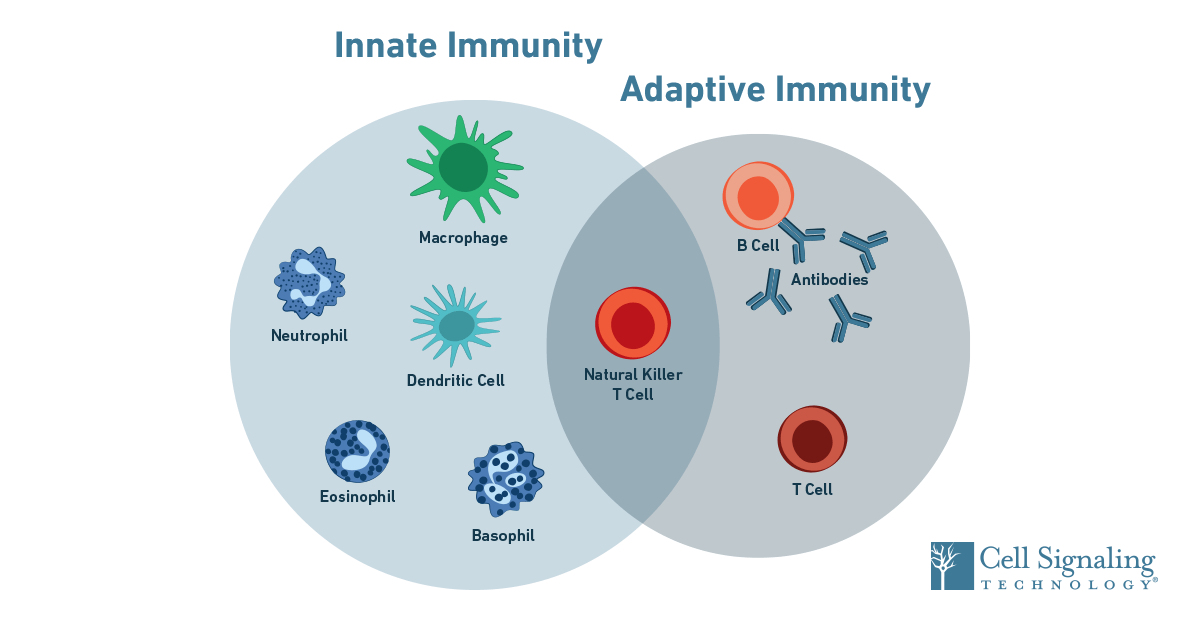 19-IMO-12805-Immunology-SEO-Blog-Content-Overview-1200x628