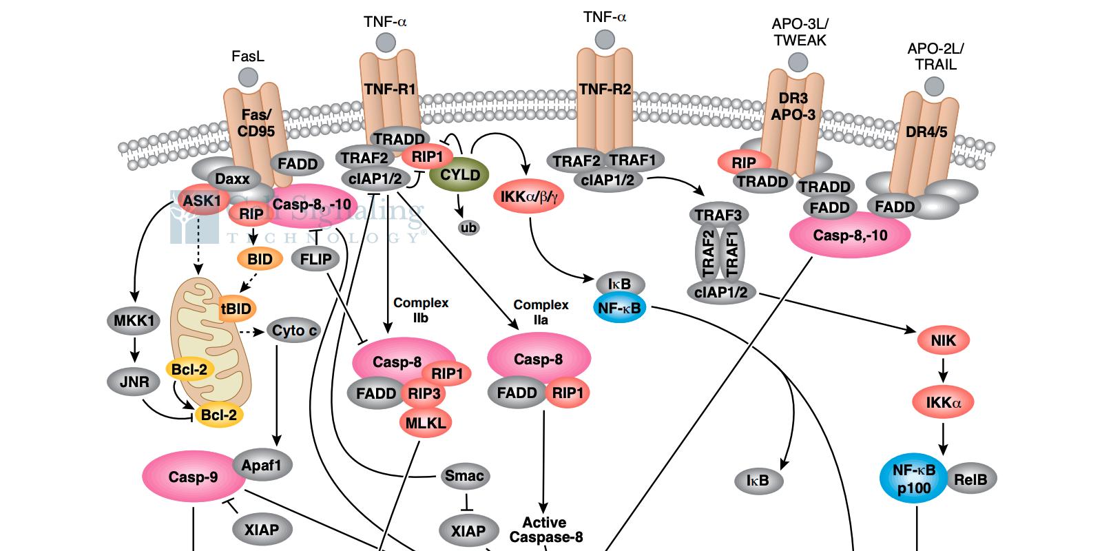 20-CEP-15480 Cytotoxicity Art