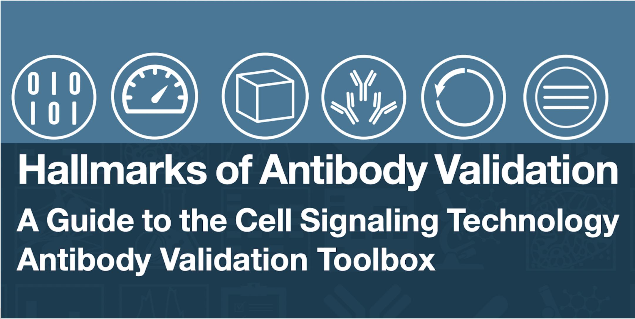 Hallmarks of Antibody Validation Overview