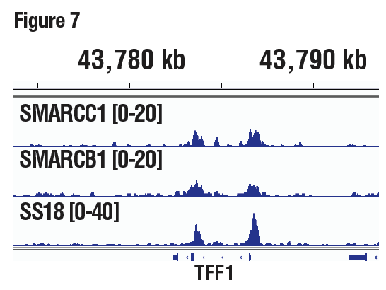 SMARCC1/BAF155, SMARCB1/BAF47, and SS18 are all subunits of SWI/SNF complex. The figure shows binding across pS2/TFF1, a known target gene of SWI/SNF complex.