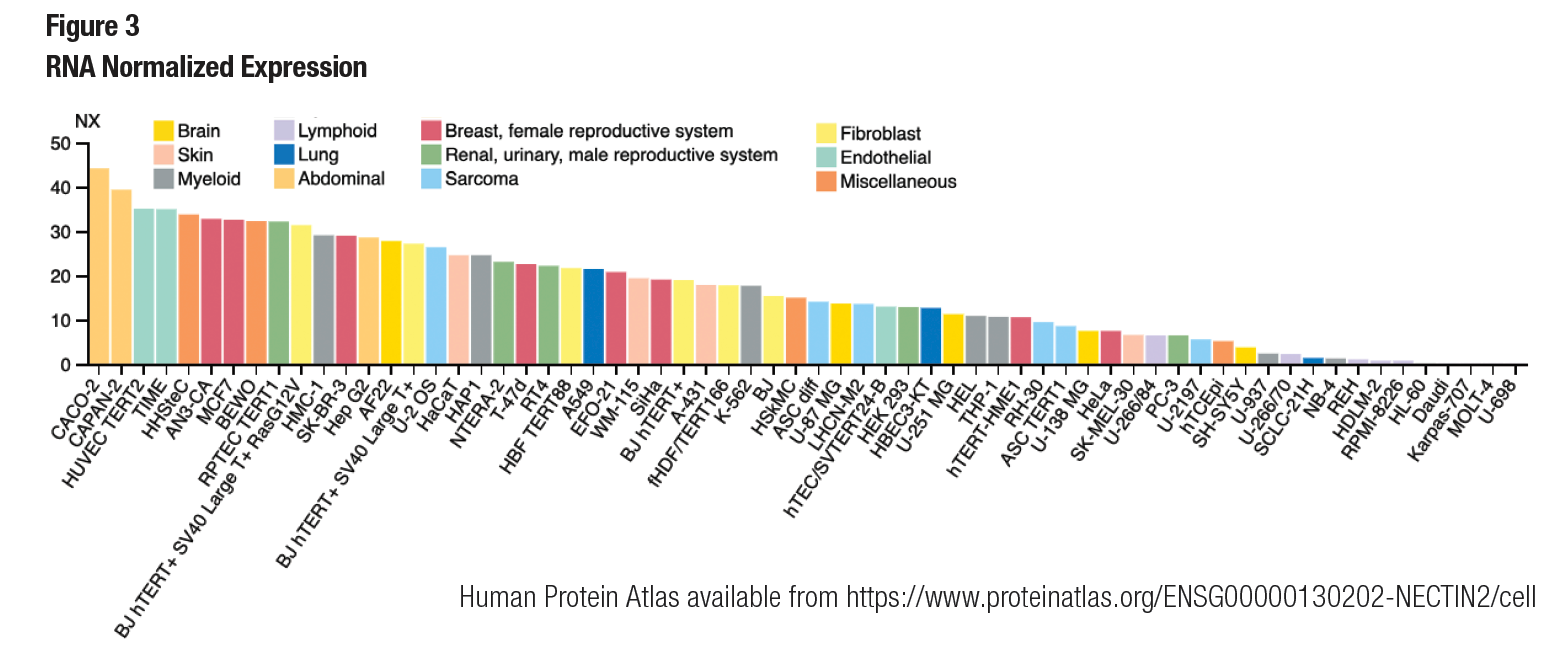 Normalized RNA Expression
