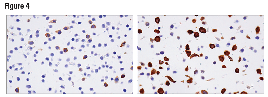 IHC analysis of paraffin-embedded HT-29 cell pellet using RRM2 (E7Y9J)
