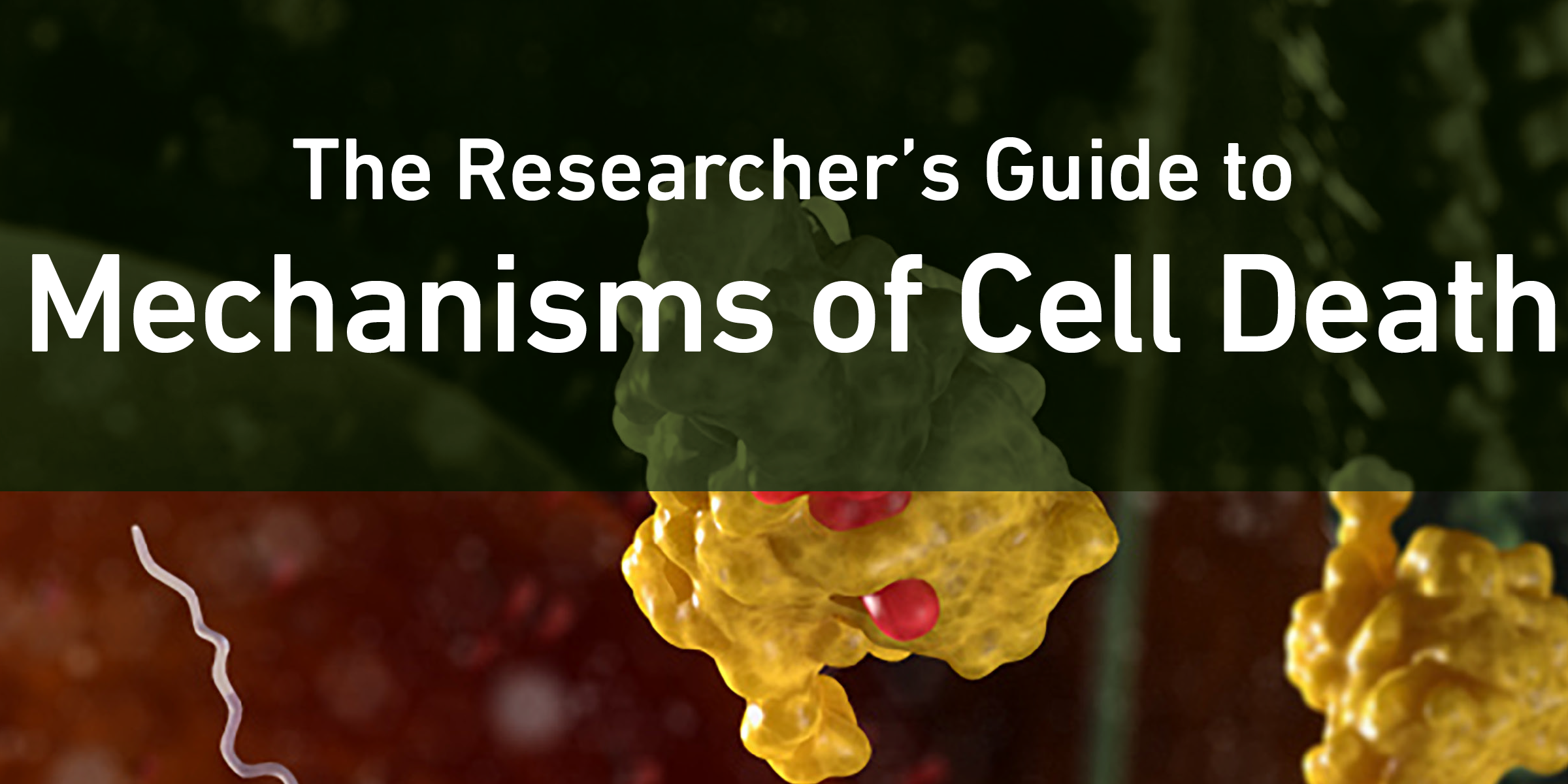 20-CEP-94379 Guide to Mechanism of Cell Death