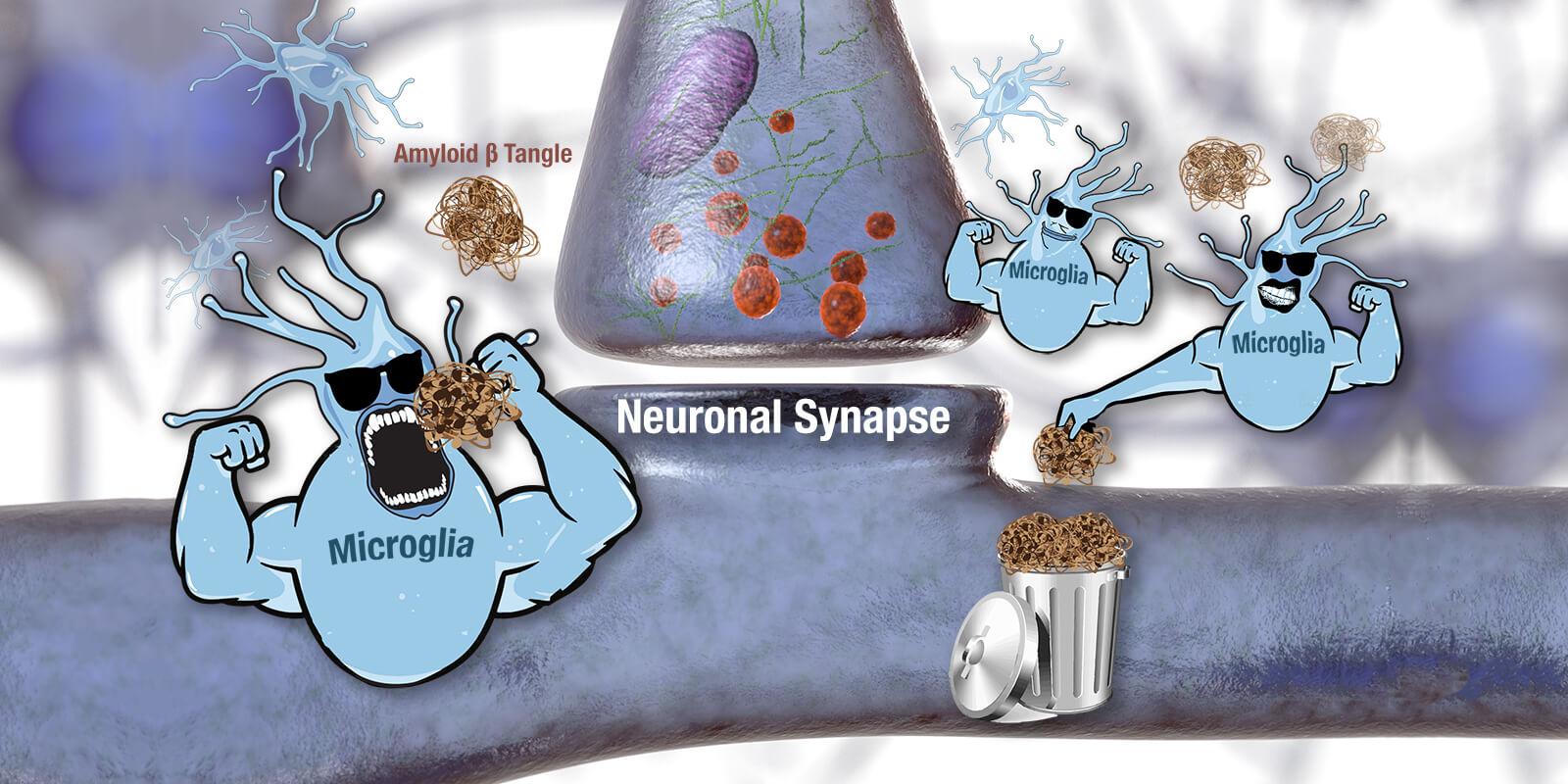 synapse-microglia illustration wide 1600x800.jpg