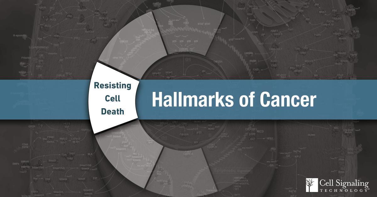 18-CEL-47282-Blog-Hallmarks-Cancer-1-Resisting-Cell-Death
