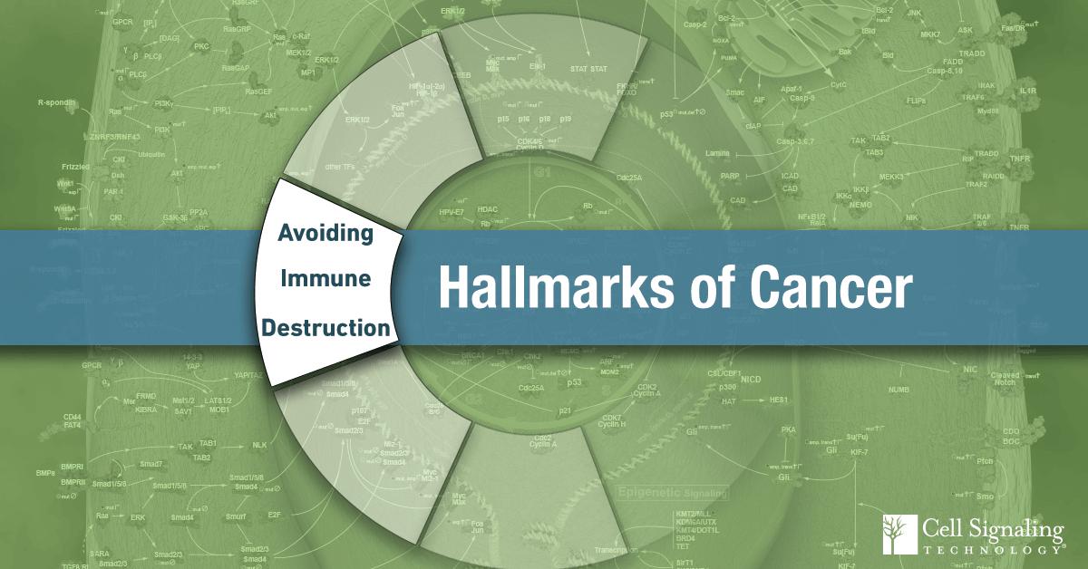18-CEL-47282-Blog-Hallmarks-of-Cancer-Avoiding-Immune-Destruction-7