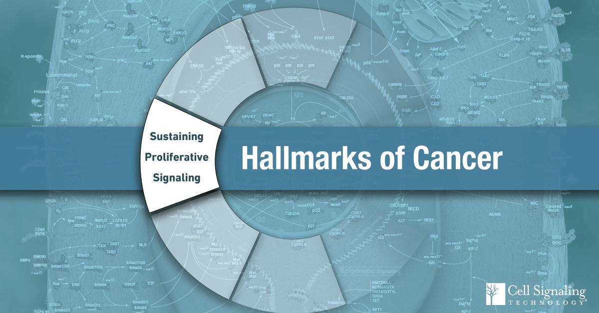 18-CEL-47850-Blog-Hallmarks-Cancer-4-Sustaining-Proliferative-Signaling
